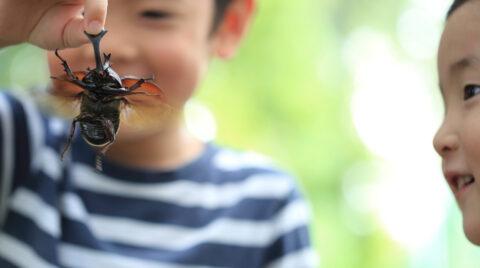 小学生に人気!昆虫や爬虫類のいる暮らし