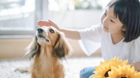 マイホーム×犬のいる暮らし