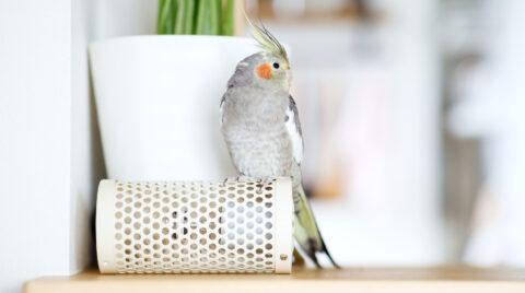 鳥のいる暮らし・鳥を飼う家づくり